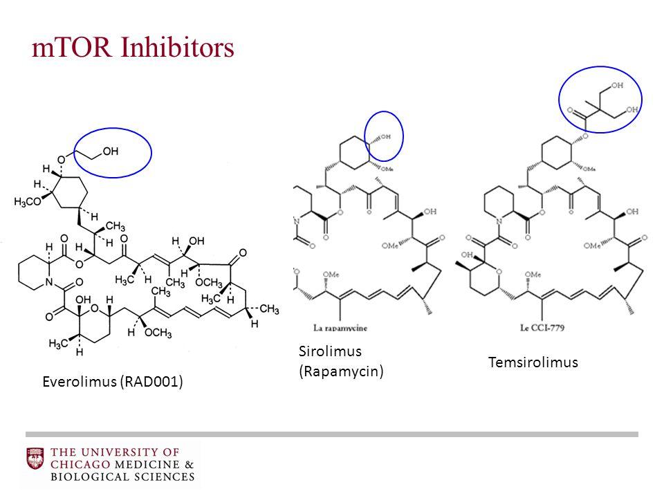 mTOR Inhibitors Sirolimus (Rapamycin) Temsirolimus Everolimus (RAD001)