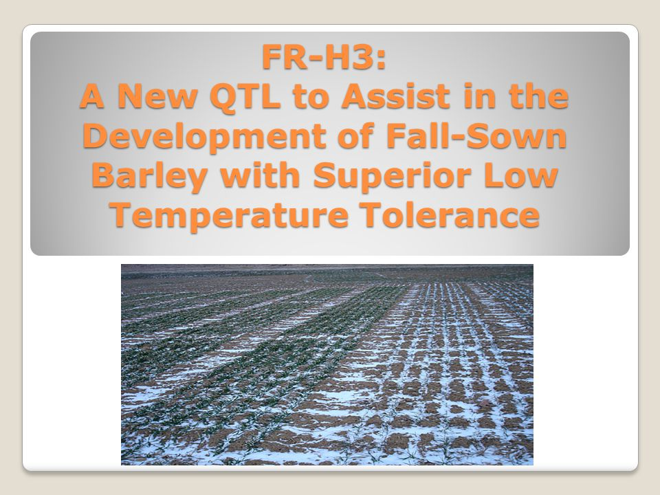 FR-H3: A New QTL to Assist in the Development of Fall-Sown Barley with Superior Low Temperature Tolerance