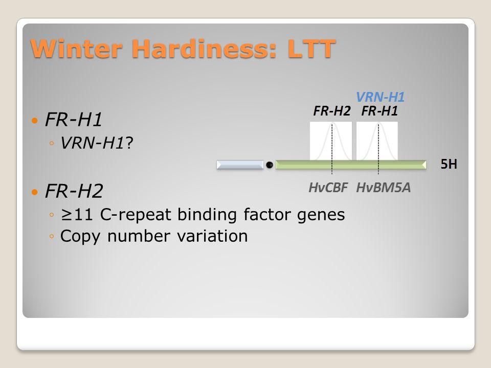 Winter Hardiness: LTT FR-H1 ◦VRN-H1? FR-H2 ◦≥11 C-repeat binding factor genes ◦Copy number variation