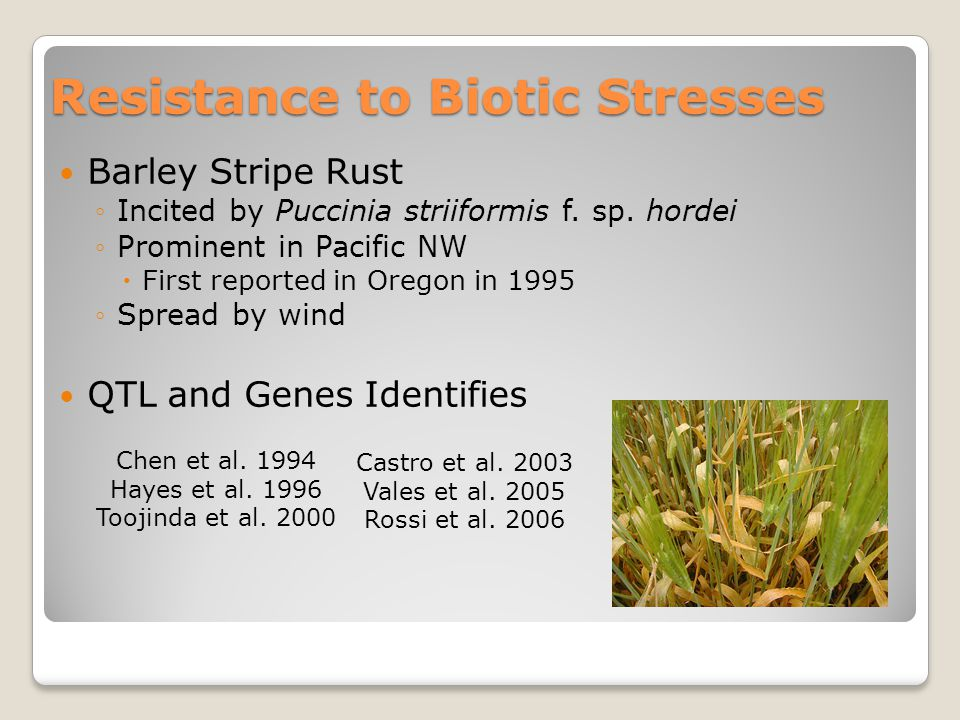 Resistance to Biotic Stresses Barley Stripe Rust ◦Incited by Puccinia striiformis f.