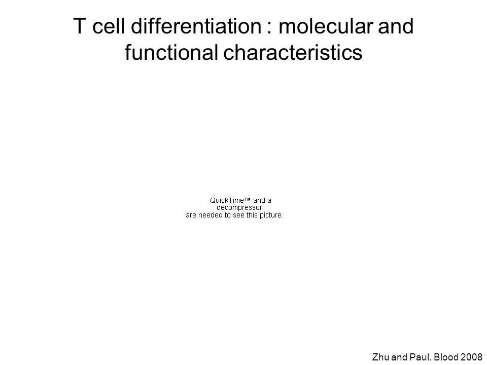 T cell differentiation : molecular and functional characteristics Zhu and Paul. Blood 2008