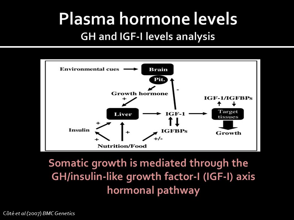 Somatic growth is mediated through the GH/insulin-like growth factor-I (IGF-I) axis hormonal pathway Côté et al (2007) BMC Genetics
