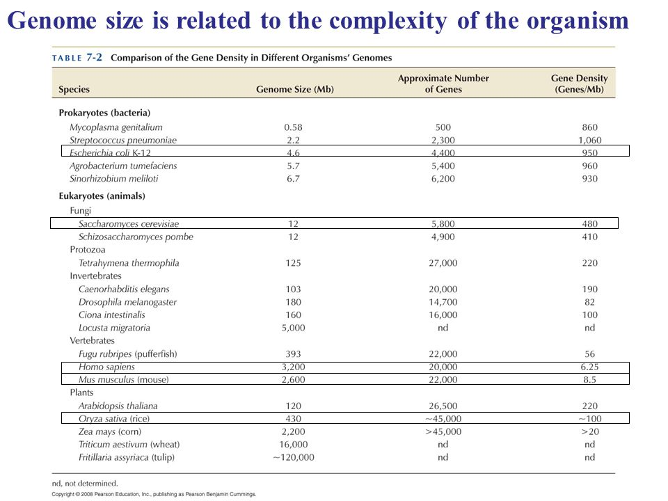 Genome size is related to the complexity of the organism