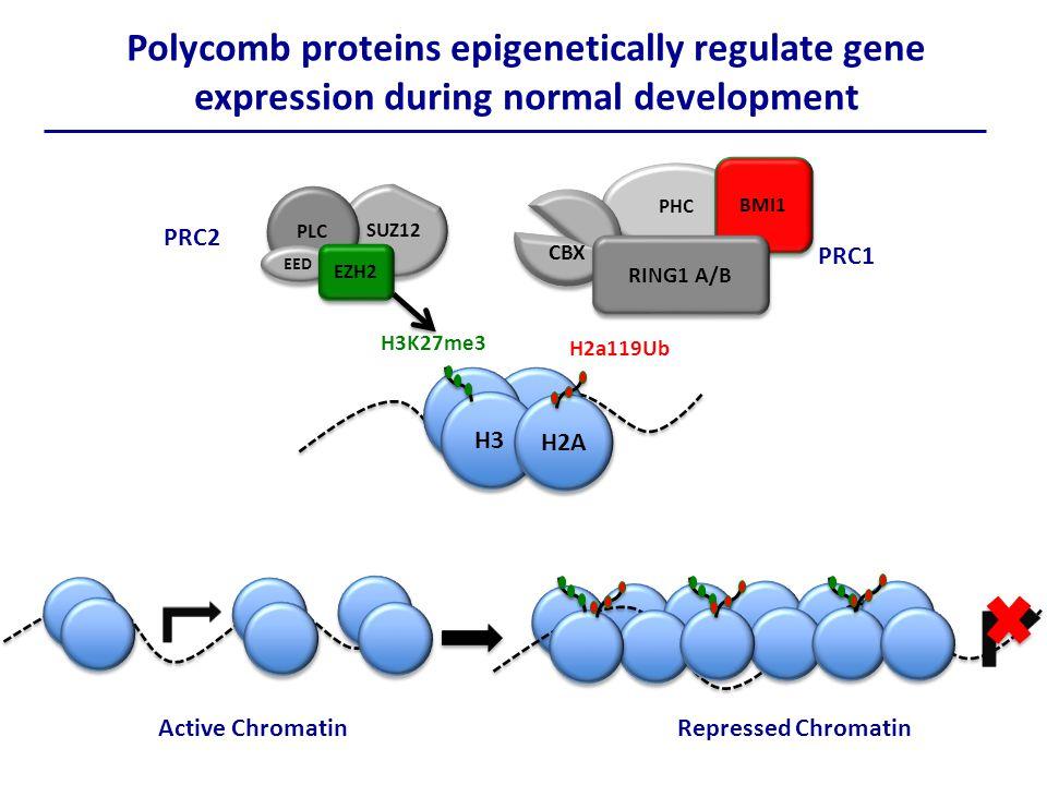 Developmental transcription factors.
