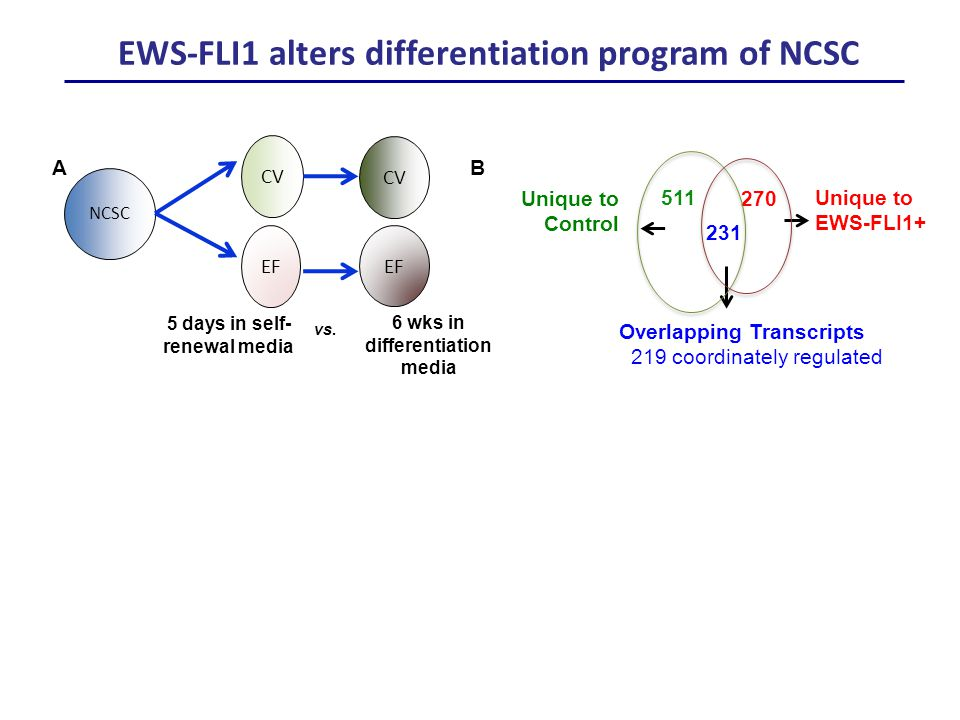 Unique to EWS-FLI1+ Unique to Control 511 231 270 Overlapping Transcripts 219 coordinately regulated B CV EF NCSC 5 days in self- renewal media 6 wks in differentiation media vs.