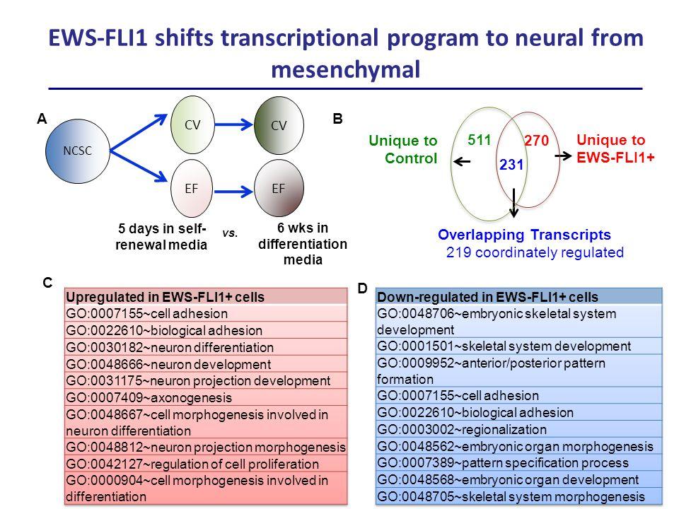 Unique to EWS-FLI1+ Unique to Control 511 231 270 Overlapping Transcripts 219 coordinately regulated B C EWS-FLI1 shifts transcriptional program to ne