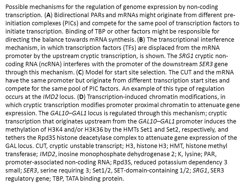 Possible mechanisms for the regulation of genome expression by non-coding transcription. (A) Bidirectional PARs and mRNAs might originate from differe