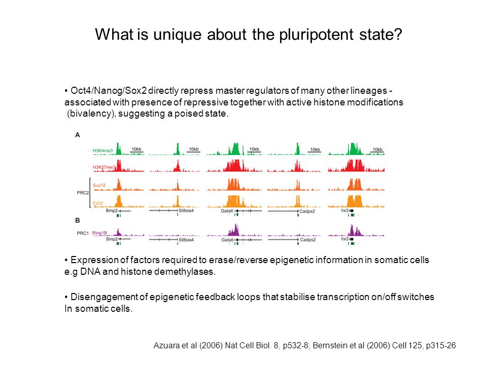 What is unique about the pluripotent state.