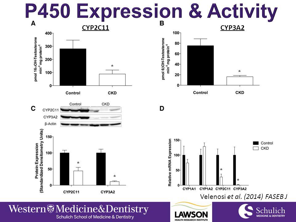Velenosi et al. (2014) FASEB J CYP2C11CYP3A2