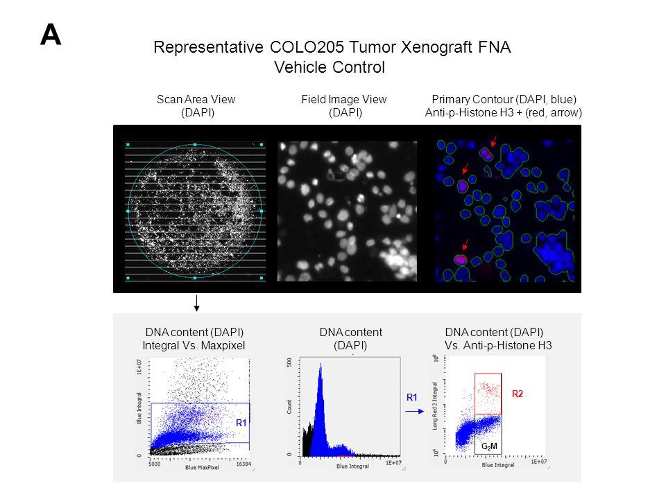 A Scan Area View (DAPI) Field Image View (DAPI) Primary Contour (DAPI, blue) Anti-p-Histone H3 + (red, arrow) DNA content (DAPI) Integral Vs.