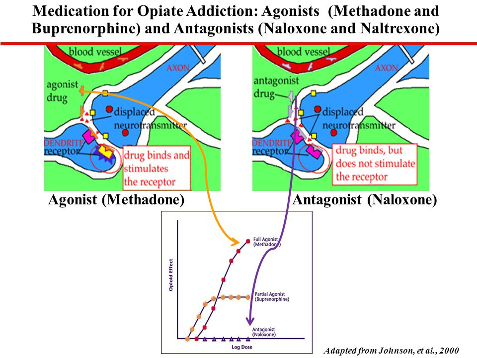 Agonist (Methadone)Antagonist (Naloxone) Adapted from Johnson, et al., 2000 Medication for Opiate Addiction: Agonists (Methadone and Buprenorphine) and Antagonists (Naloxone and Naltrexone)