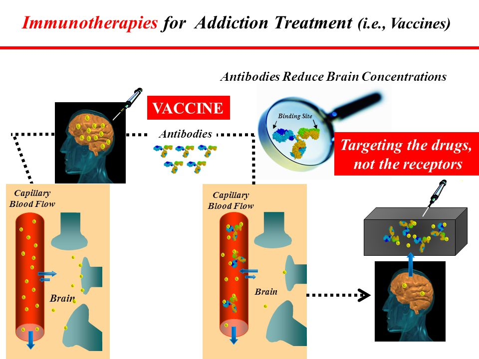 Binding Site Capillary Blood Flow Brain Antibodies VACCINE Antibodies Reduce Brain Concentrations Immunotherapies for Addiction Treatment (i.e., Vacci