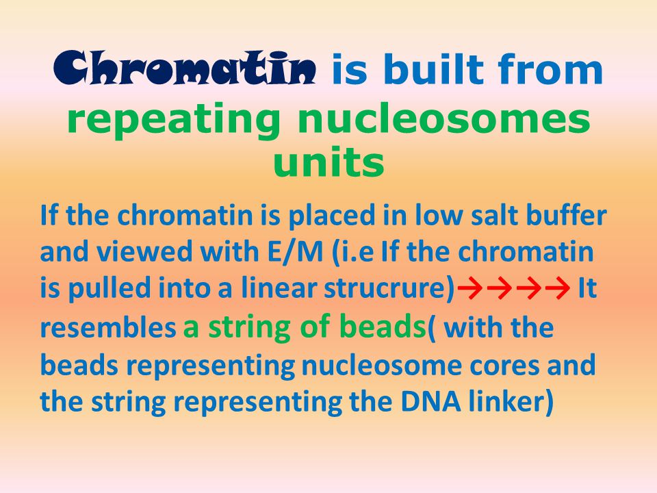Chromatin is built from repeating nucleosomes units If the chromatin is placed in low salt buffer and viewed with E/M (i.e If the chromatin is pulled into a linear strucrure)→→→→ It resembles a string of beads ( with the beads representing nucleosome cores and the string representing the DNA linker)