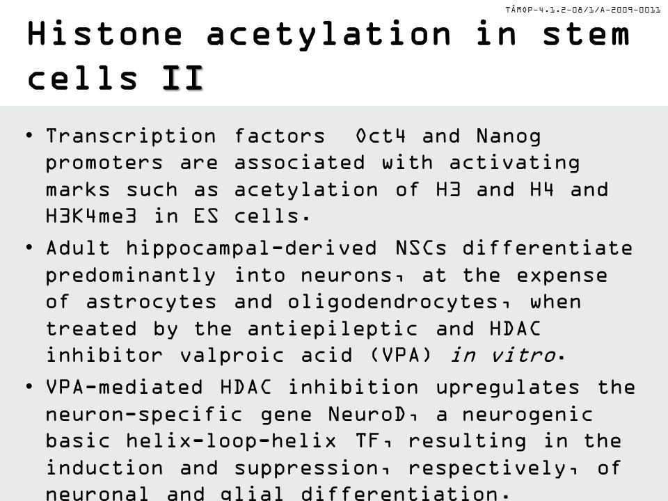TÁMOP-4.1.2-08/1/A-2009-0011 II Histone acetylation in stem cells II Transcription factors Oct4 and Nanog promoters are associated with activating mar