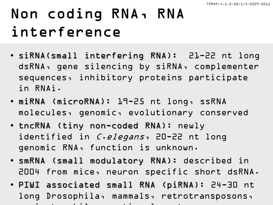 TÁMOP-4.1.2-08/1/A-2009-0011 Non coding RNA, RNA interference siRNA(small interfering RNA):siRNA(small interfering RNA): 21-22 nt long dsRNA, gene silencing by siRNA, complementer sequences, inhibitory proteins participate in RNAi.