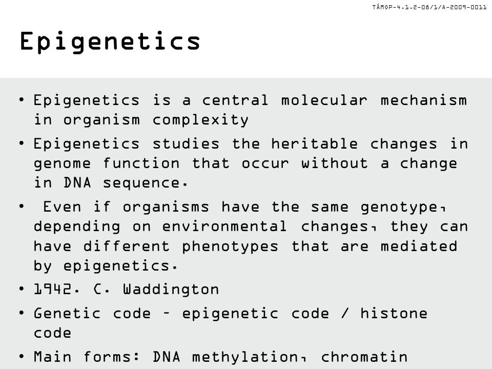 TÁMOP-4.1.2-08/1/A-2009-0011 Epigenetics Epigenetics is a central molecular mechanism in organism complexity Epigenetics studies the heritable changes in genome function that occur without a change in DNA sequence.