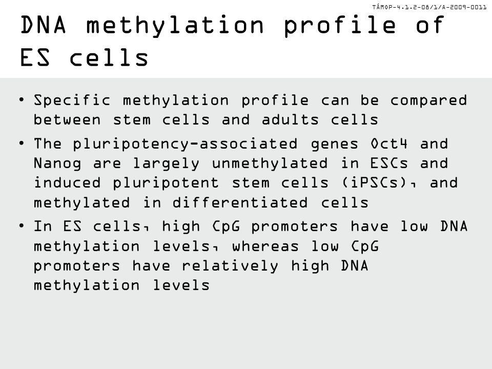 TÁMOP-4.1.2-08/1/A-2009-0011 DNA methylation profile of ES cells Specific methylation profile can be compared between stem cells and adults cells The pluripotency-associated genes Oct4 and Nanog are largely unmethylated in ESCs and induced pluripotent stem cells (iPSCs), and methylated in differentiated cells In ES cells, high CpG promoters have low DNA methylation levels, whereas low CpG promoters have relatively high DNA methylation levels