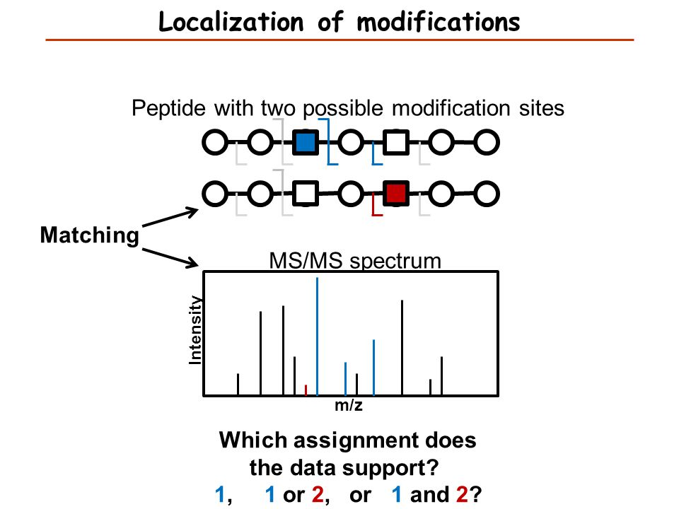 Peptide with two possible modification sites MS/MS spectrum m/z Intensity Matching Which assignment does the data support? 1, 1 or 2, or 1 and 2? Loca