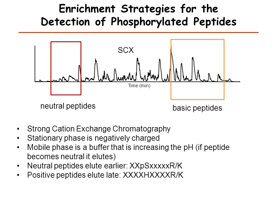 Peptide with two possible modification sites MS/MS spectrum m/z Intensity Matching Which assignment does the data support.