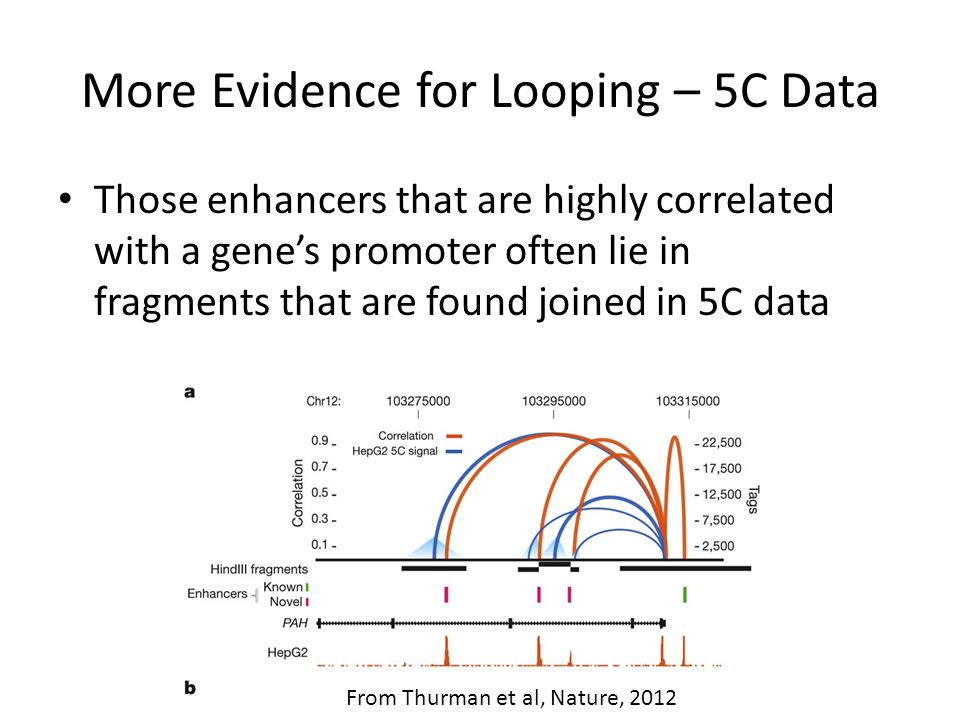 More Evidence for Looping – 5C Data Those enhancers that are highly correlated with a gene's promoter often lie in fragments that are found joined in 5C data From Thurman et al, Nature, 2012