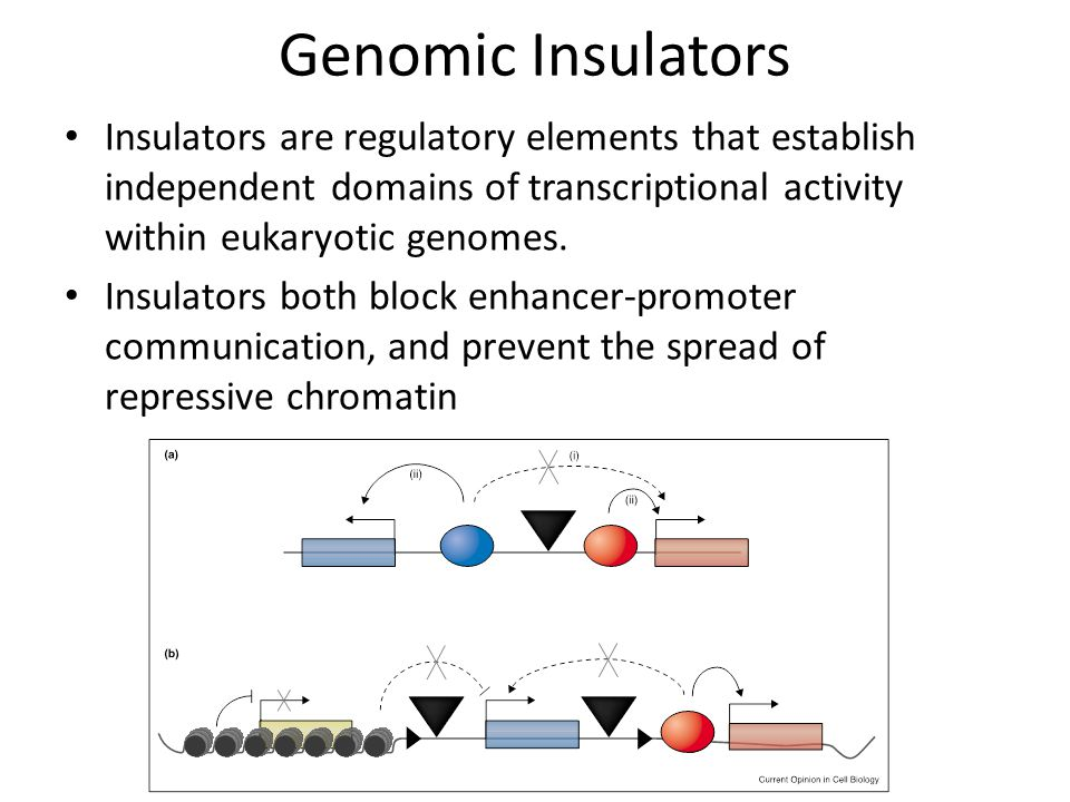 Genomic Insulators Insulators are regulatory elements that establish independent domains of transcriptional activity within eukaryotic genomes.