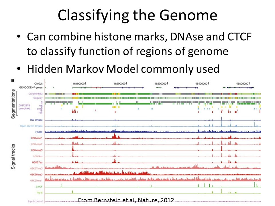 Classifying the Genome Can combine histone marks, DNAse and CTCF to classify function of regions of genome Hidden Markov Model commonly used From Bernstein et al, Nature, 2012