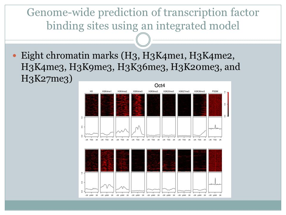 Genome-wide prediction of transcription factor binding sites using an integrated model Eight chromatin marks (H3, H3K4me1, H3K4me2, H3K4me3, H3K9me3, H3K36me3, H3K20me3, and H3K27me3)