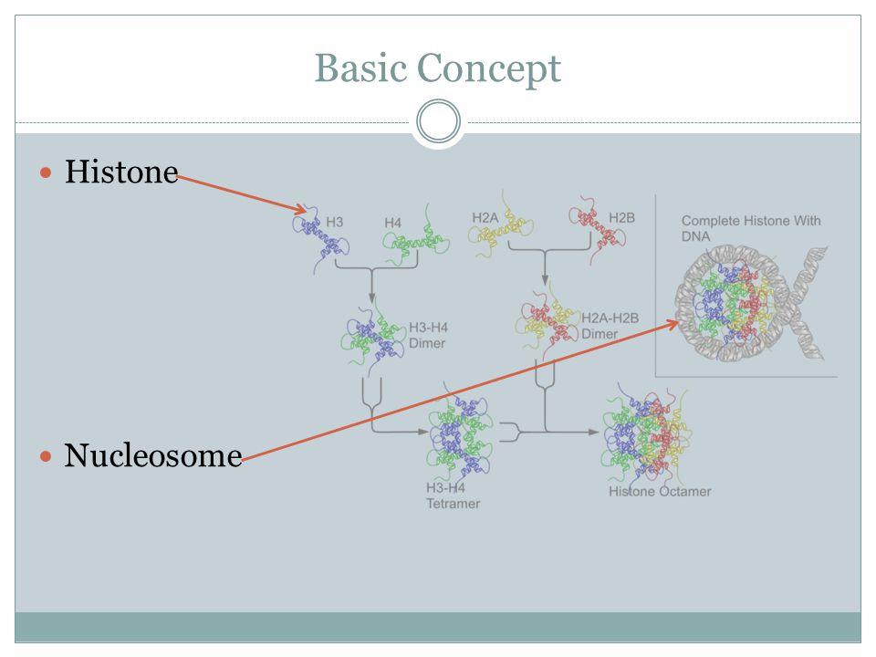 Basic Concept Histone Nucleosome