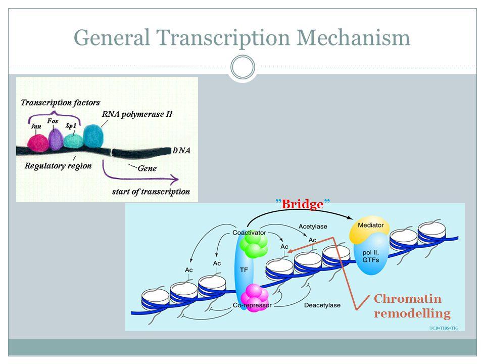 General Transcription Mechanism Bridge Chromatin remodelling