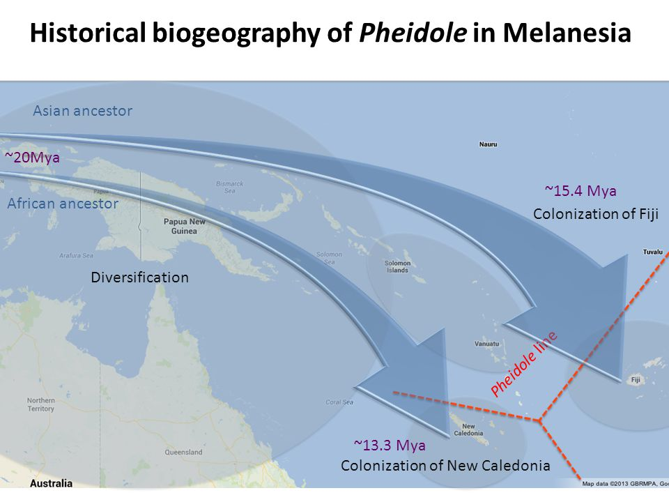 Historical biogeography of Pheidole in Melanesia Tree pruned to include only the target region Diversification Colonization of Fiji Asian ancestor African ancestor ~20Mya ~15.4 Mya ~13.3 Mya Colonization of New Caledonia Pheidole line