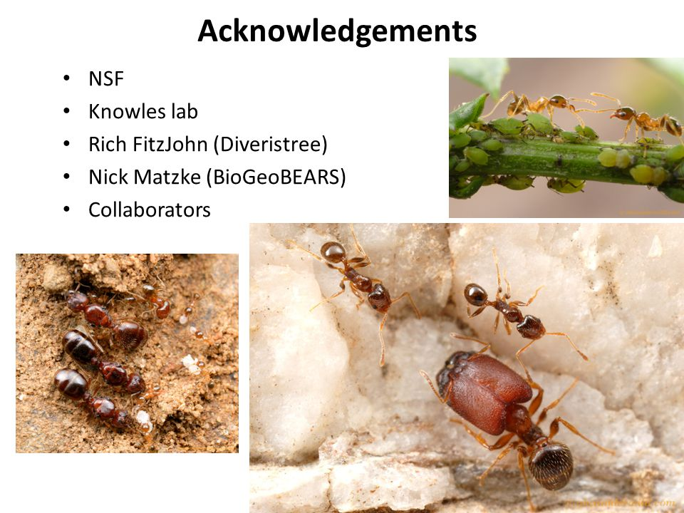 Acknowledgements NSF Knowles lab Rich FitzJohn (Diveristree) Nick Matzke (BioGeoBEARS) Collaborators