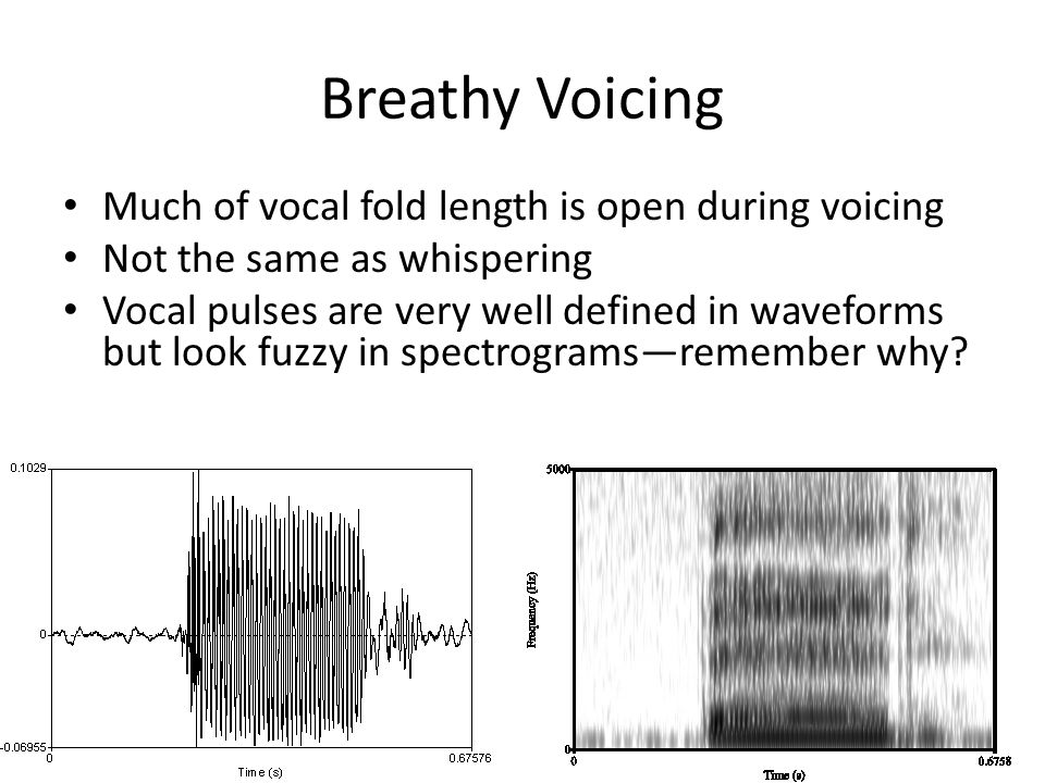 Breathy Voicing Much of vocal fold length is open during voicing Not the same as whispering Vocal pulses are very well defined in waveforms but look fuzzy in spectrograms—remember why?