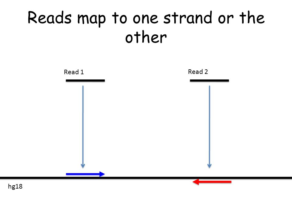 Reads map to one strand or the other Read 1 Read 2 hg18