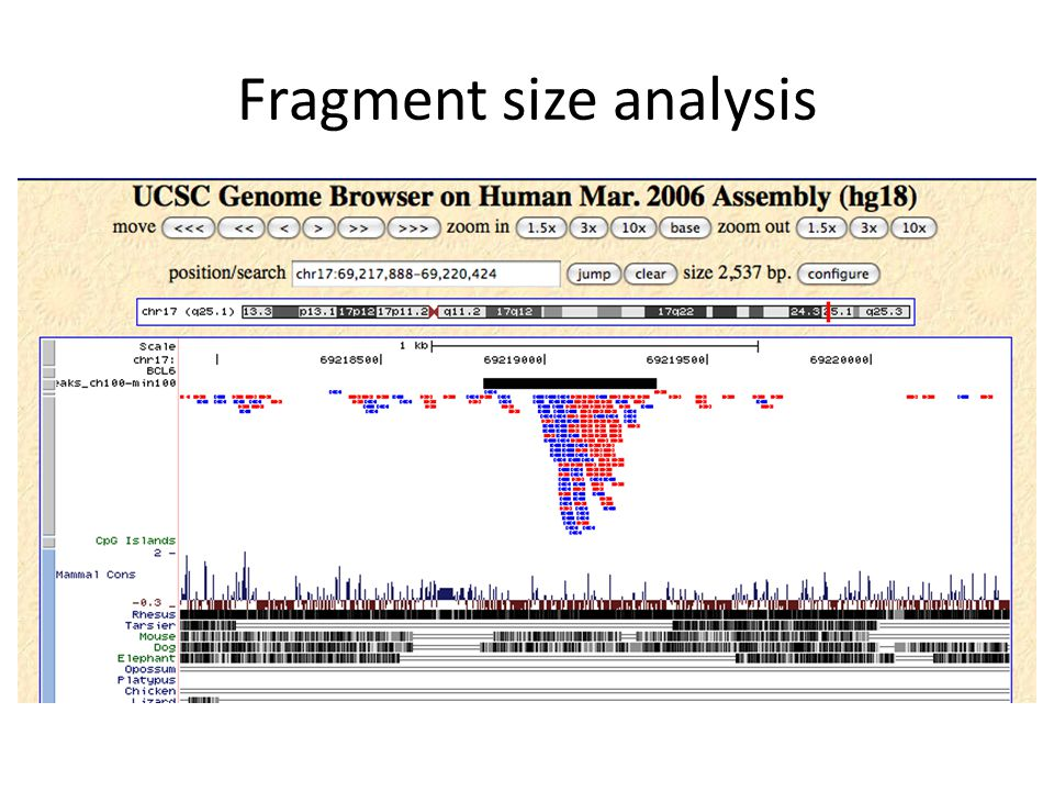 Fragment size analysis