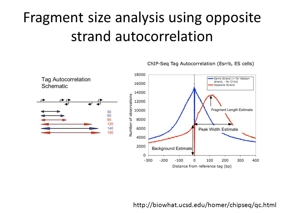 http://biowhat.ucsd.edu/homer/chipseq/qc.html Fragment size analysis using opposite strand autocorrelation