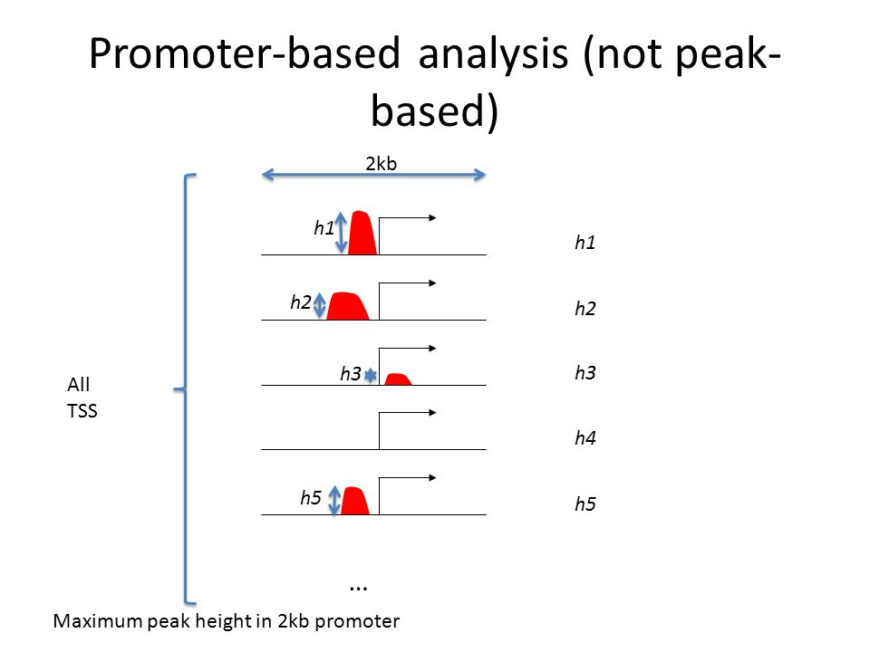 Promoter-based analysis (not peak- based) h1 h2 h3 h5 … h1 h2 h3 h4 h5 Maximum peak height in 2kb promoter 2kb All TSS