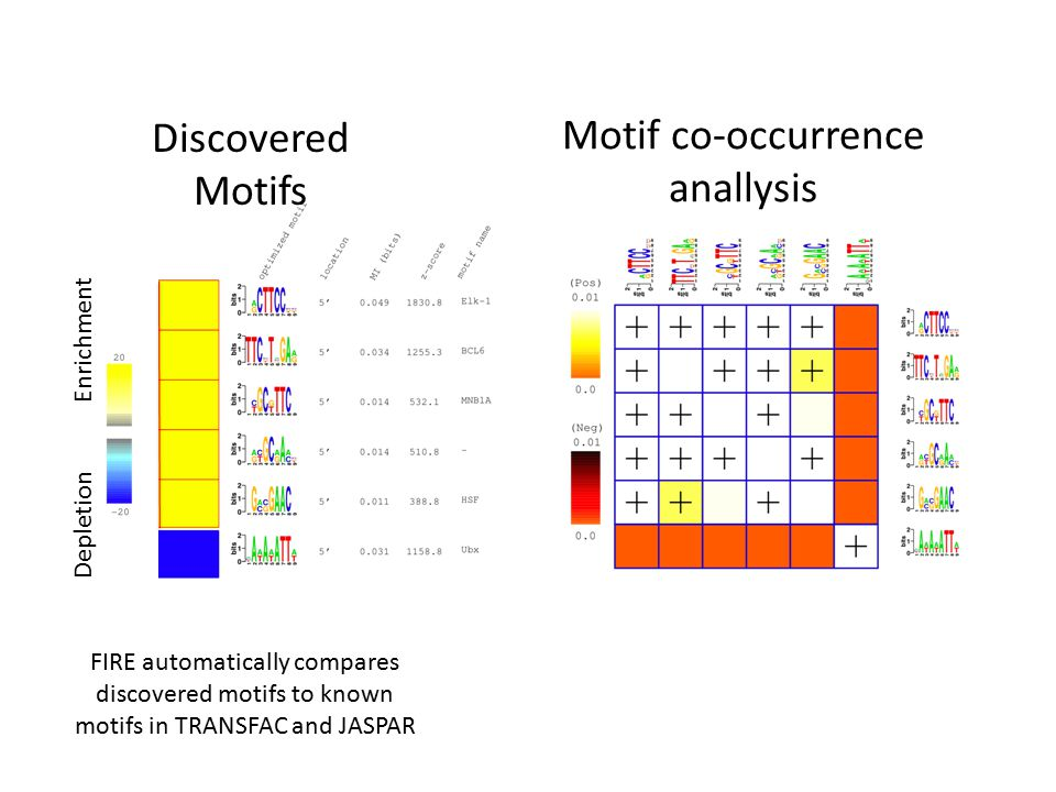 Enrichment Depletion Motif co-occurrence anallysis Discovered Motifs FIRE automatically compares discovered motifs to known motifs in TRANSFAC and JAS