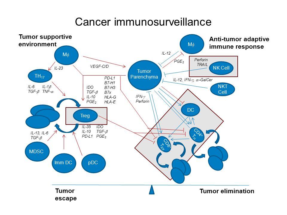 Cancer immunosurveillance IL-13, IL-6 TGF-  Tumor Parenchyma Anti-tumor adaptive immune response Tumor supportive environment IDO TGF-  IL-10 PGE 2 Treg pDC IL-35IDO IL-10TGF-  PD-L1PGE 2 Imm DC MDSC CD8 + T Eff Tumor escape Tumor elimination MM PD-L1 B7-H1 B7-H3 B7x HLA-G HLA-E VEGF-C/D TH 17 IL-23 IFN-  Perforin B cell NKT Cell IL-12, IFN-  GalCer IL-6IL-1  TGF-  TNF-  NK Cell Perforin TRAIL IL-12 MM DC CD4 + T H PGE 2