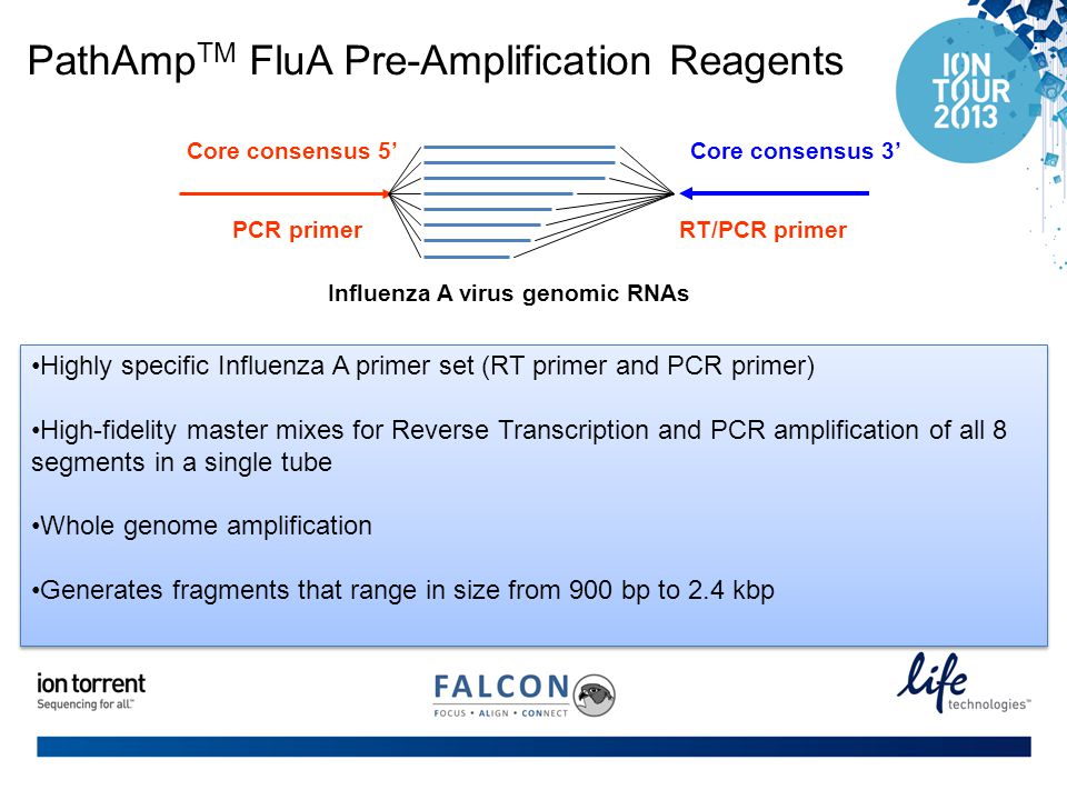 PathAmp TM FluA Pre-Amplification Reagents PCR primerRT/PCR primer Core consensus 5' Influenza A virus genomic RNAs Core consensus 3' Highly specific Influenza A primer set (RT primer and PCR primer) High-fidelity master mixes for Reverse Transcription and PCR amplification of all 8 segments in a single tube Whole genome amplification Generates fragments that range in size from 900 bp to 2.4 kbp Highly specific Influenza A primer set (RT primer and PCR primer) High-fidelity master mixes for Reverse Transcription and PCR amplification of all 8 segments in a single tube Whole genome amplification Generates fragments that range in size from 900 bp to 2.4 kbp