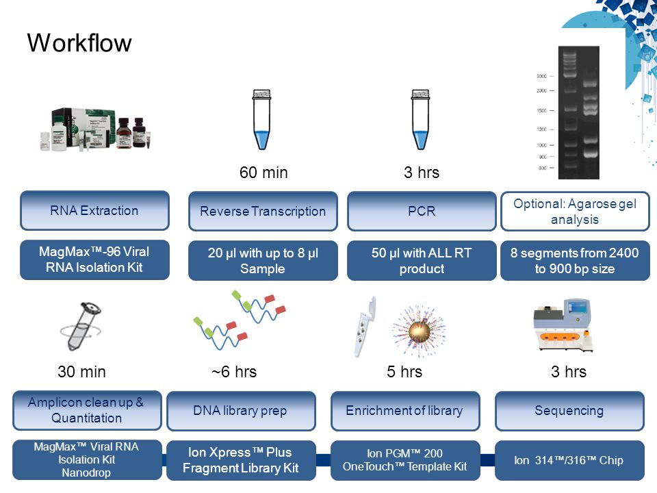 Workflow 5 Reverse Transcription 20 µl with up to 8 µl Sample 60 min PCR 50 µl with ALL RT product 3 hrs Optional: Agarose gel analysis 8 segments fro