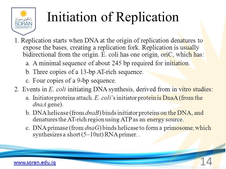 www.soran.edu.iq Initiation of Replication 1. Replication starts when DNA at the origin of replication denatures to expose the bases, creating a repli