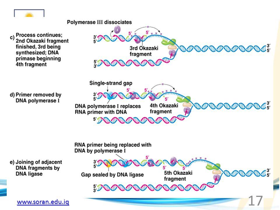 www.soran.edu.iq Fig. 3.6c-e Model for the events occurring around a single replication fork of the E. coli chromosome 17