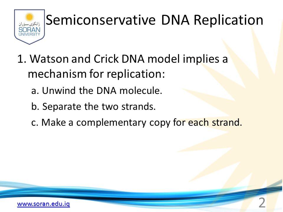 www.soran.edu.iq Semiconservative DNA Replication 1. Watson and Crick DNA model implies a mechanism for replication: a. Unwind the DNA molecule. b. Se