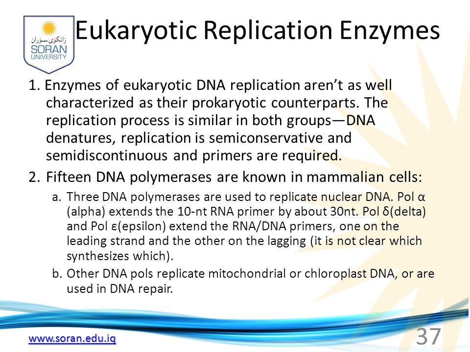 www.soran.edu.iq Eukaryotic Replication Enzymes 1. Enzymes of eukaryotic DNA replication aren't as well characterized as their prokaryotic counterpart