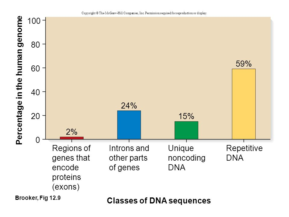 Brooker, Fig 12.9 Percentage in the human genome Classes of DNA sequences 60 40 20 100 Regions of genes that encode proteins (exons) 2% 24% 15% 59% 80