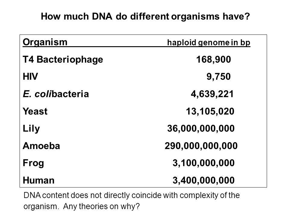 How much DNA do different organisms have? DNA content does not directly coincide with complexity of the organism. Any theories on why? Organism haploi