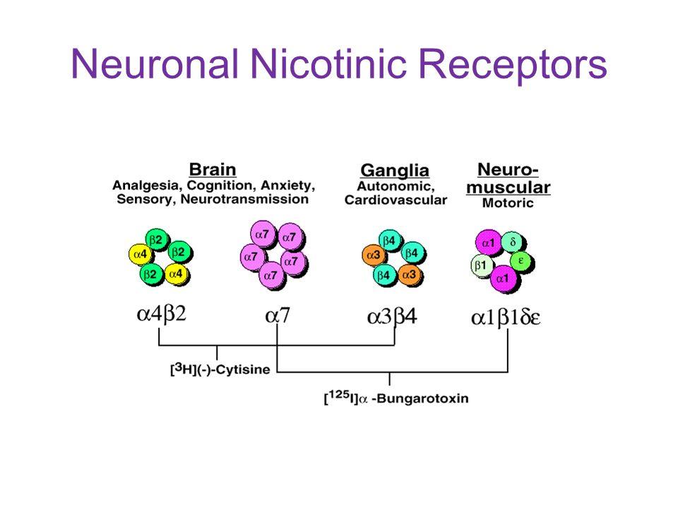 Neuronal Nicotinic Receptors