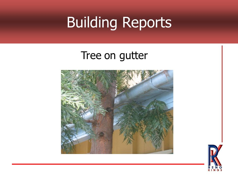 Building Reports Tree on gutter