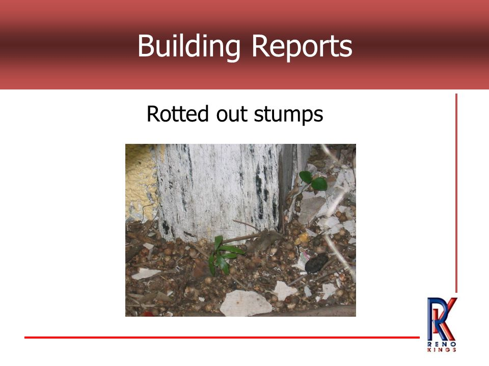 Building Reports Rotted out stumps
