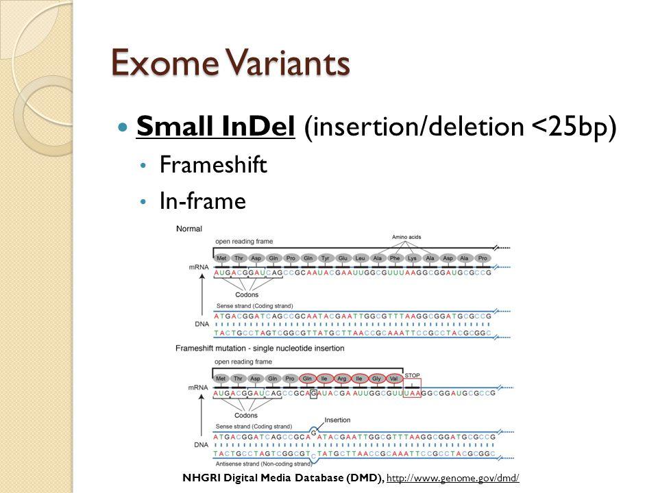 Exome Variants Small InDel (insertion/deletion <25bp) Frameshift In-frame NHGRI Digital Media Database (DMD), http://www.genome.gov/dmd/